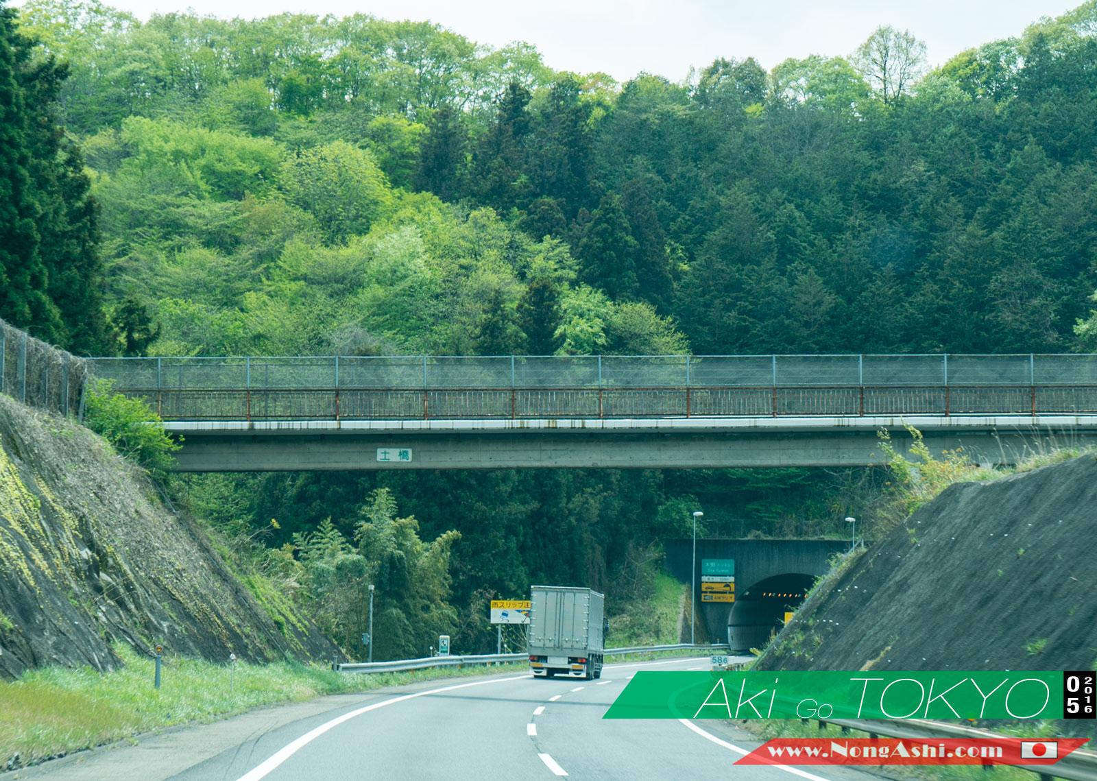ขับรถเที่ยวญี่ปุ่นจะเจอภูเขาต้นไม้ตลอด 2 ข้างทางเลย