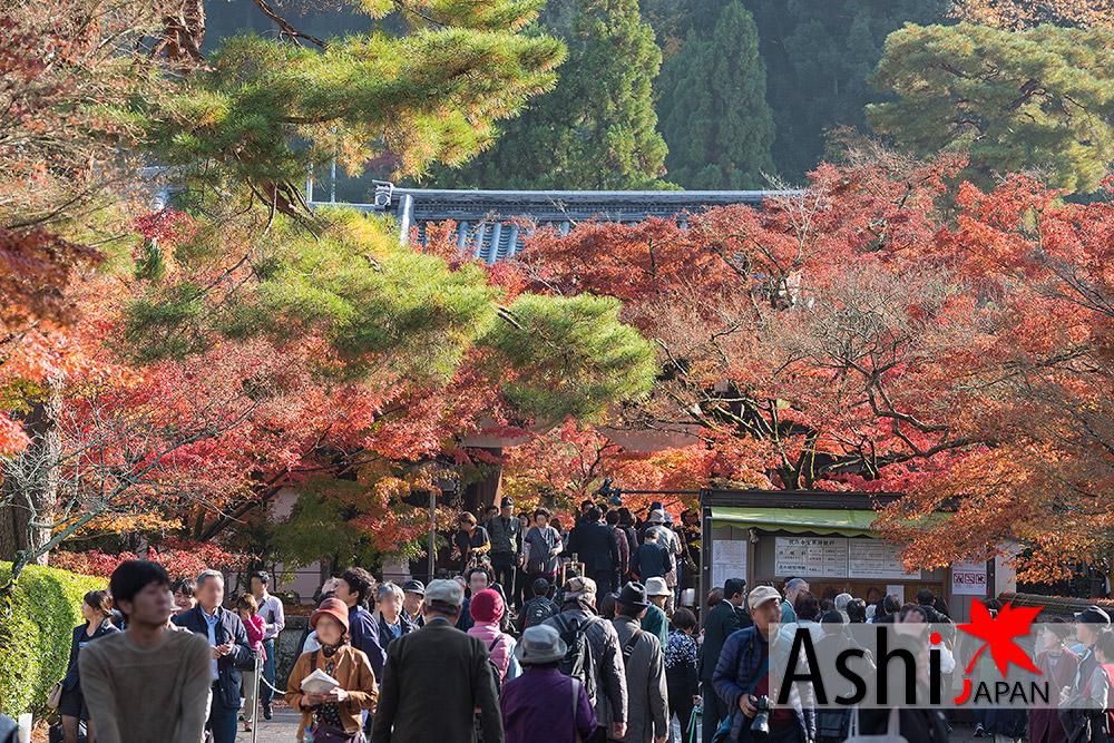 ทางเข้าวัด Eikando Temple ค่าเข้าชม 1,000 เยน