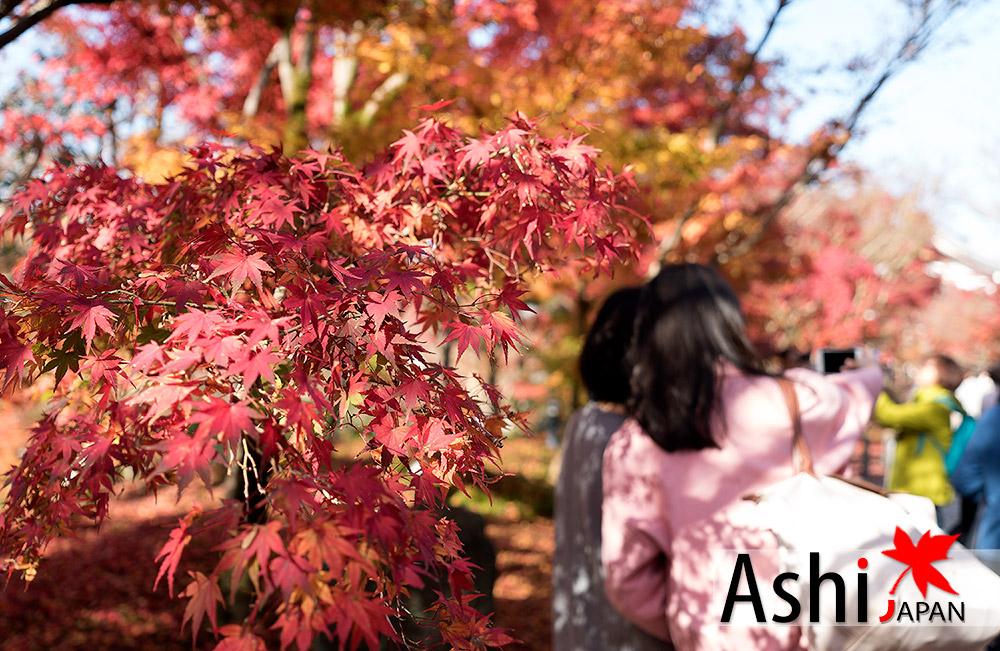 แชะ ภาพใบไม้แดงสวยๆกันใหญ่ | ใบไม้เปลี่ยนสีเกียวโต