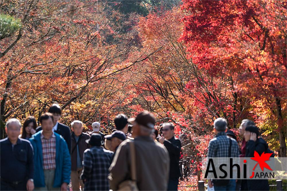 ใบไม้ร่วงไปบ้างแล้ว แต่ก็ยังสวยย | ใบไม้เปลี่ยนสีเกียวโต