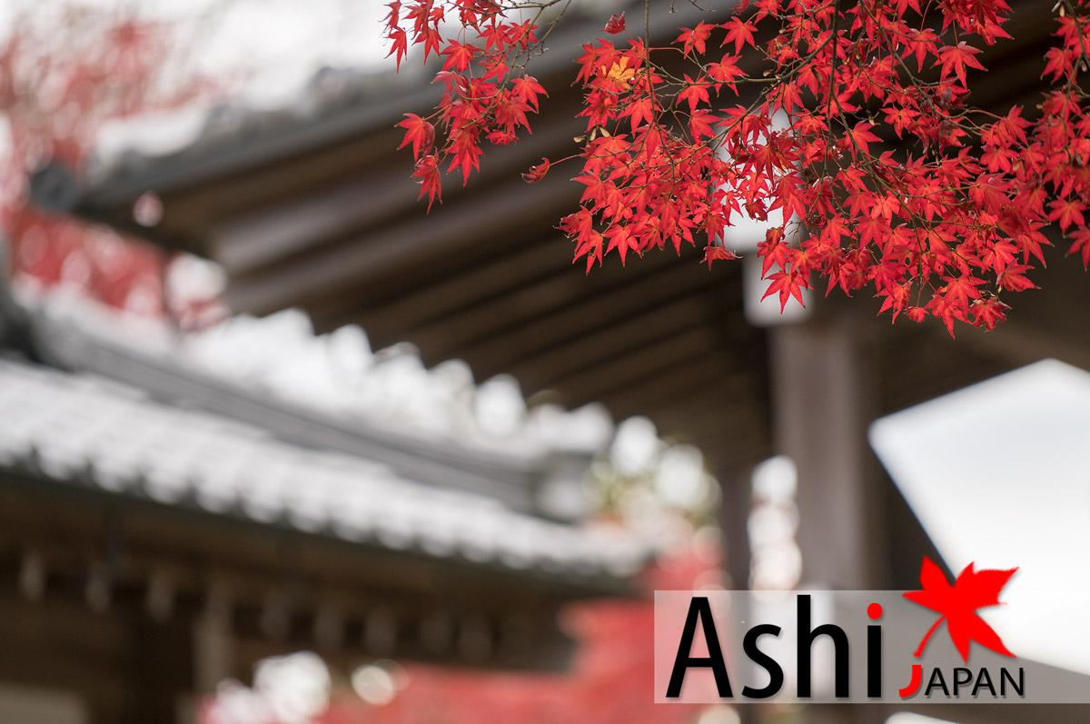 ใบไม้เปลี่ยนสีที่วัด Jojakkoji Temple