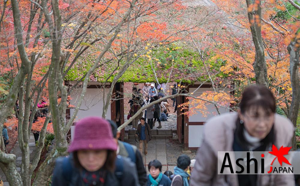 ตอนที่ผมมาถึงวัด Jojakkoji Temple คนยังหล่อมแหล๋ม