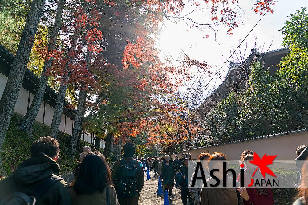 นักท่องเที่ยวมา Tofukuji Temple ไม่ขาดสาย
