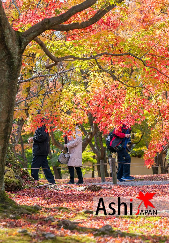 ใบไม้เปลี่ยนสีที่วัด Tofukuji Temple