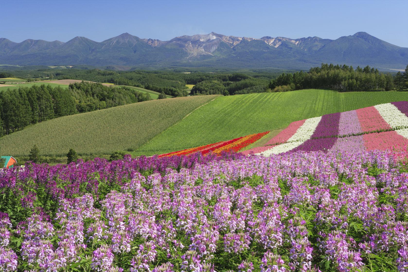 เขาชิกิไซ (Shikisai Hill) - เมืองบิเอะ (Biei - 美瑛) : Hokkaido
